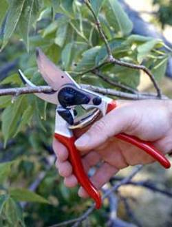 Pruning_simple_pic